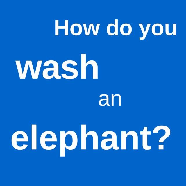 wash an elephant
